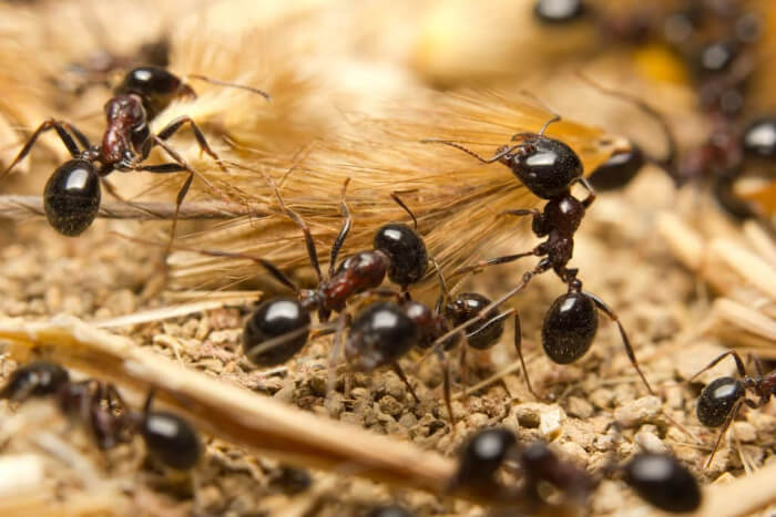 Are There Different Types of Ant in the UK?