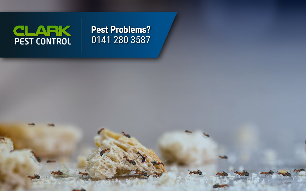 Pest Control Company Greenfield