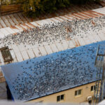 What Problems Will Birds Cause on My Property?
