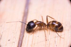 ant problem glasgow