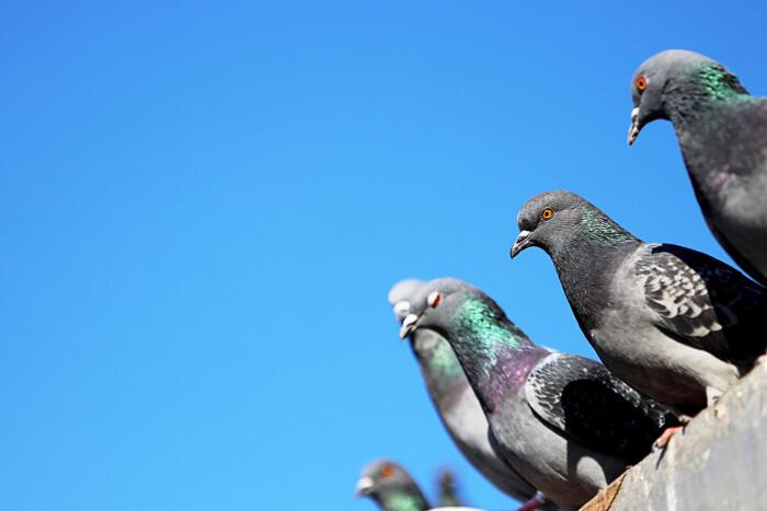 What is Bird Spiking?