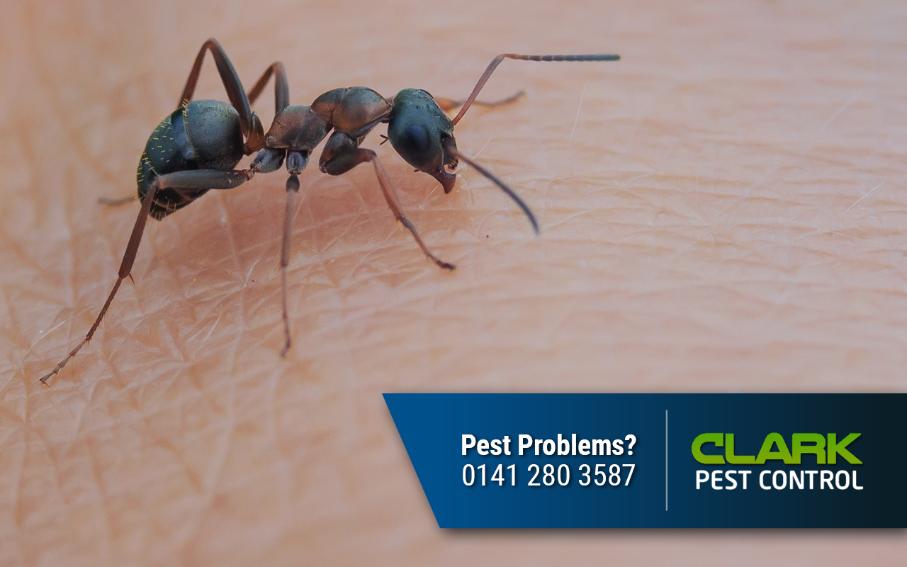 Pest Control Company Rothesay