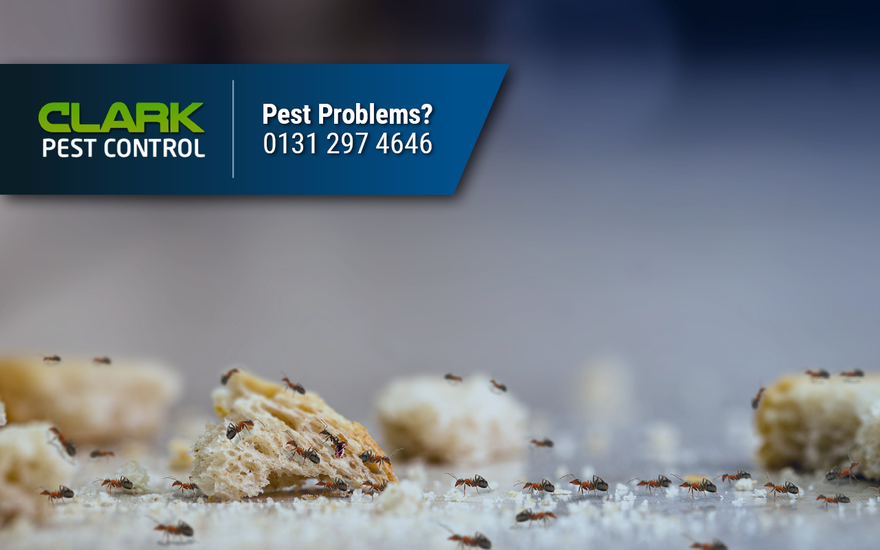 Pest Control Company North Middleton