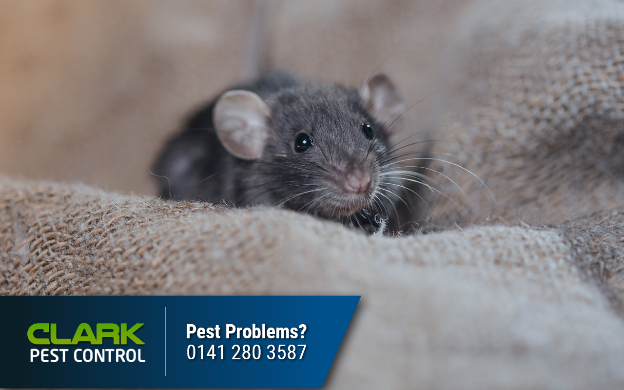 Pest Control Company Glen Village