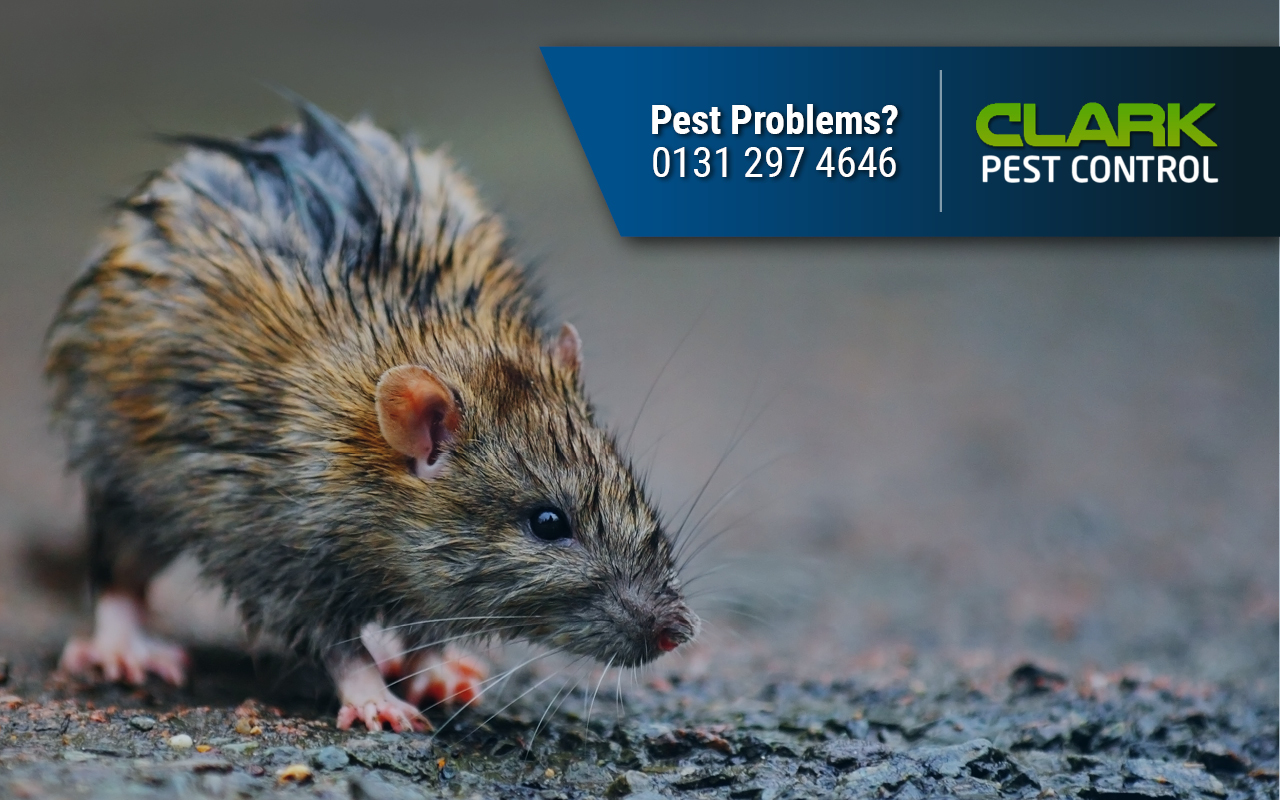Pest Control Edinburgh