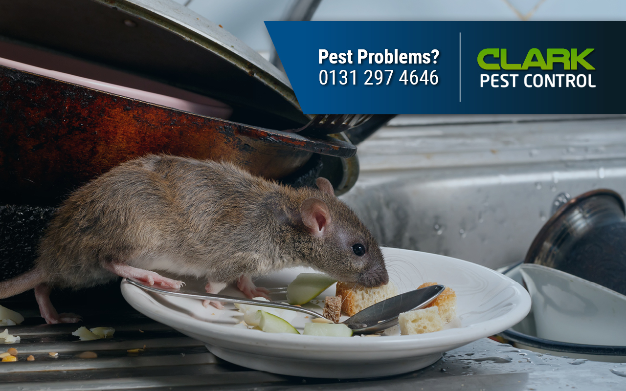 Pest Control Company Blackburn