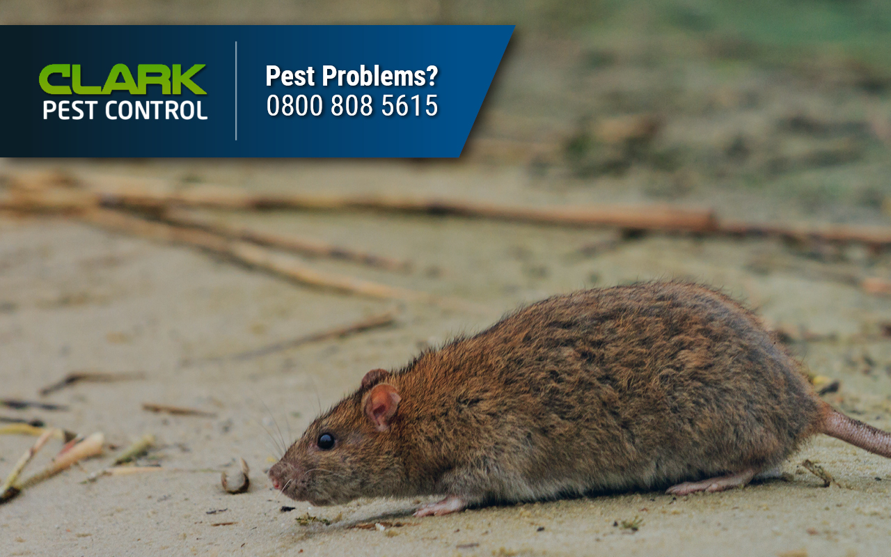 Pest Control Company Laurieston